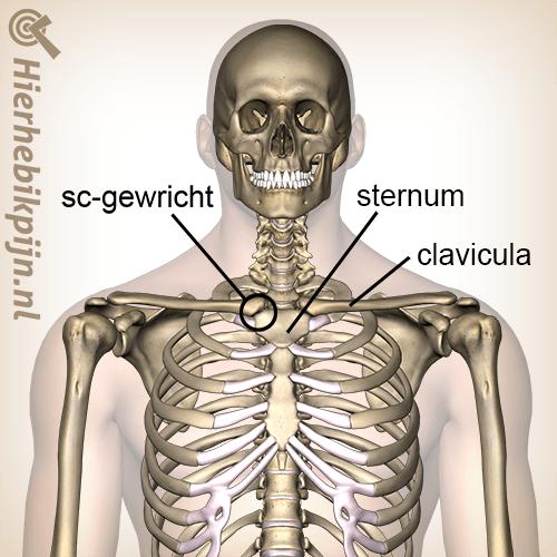 borst sternoclaviculaire gewricht locatie sternum clavicula