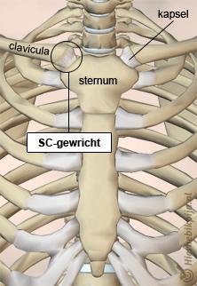 borst sternum clavicula sc gewricht