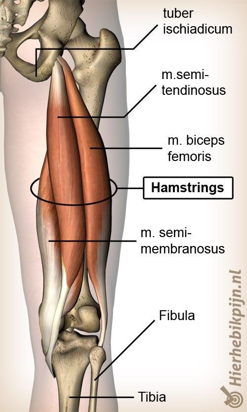 Foto Hamstring blessure