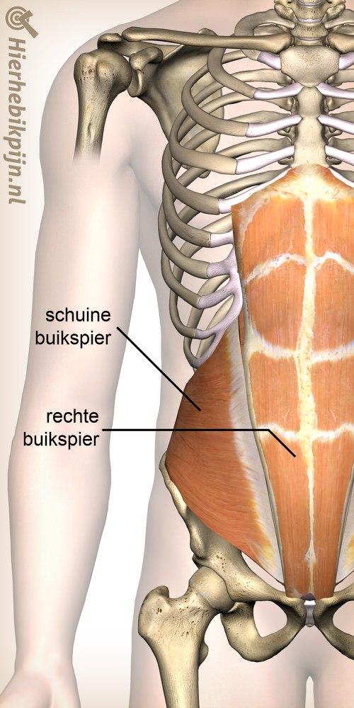 buik schuine buikspier rechte buikspier anatomie