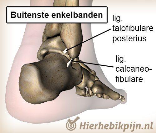 enkel ligament ligamentum talofibulare posterius calcaneofibulare calcaneus anatomie achter