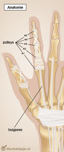 hand vinger pulleys