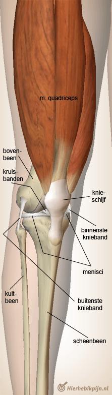 anatomie knieholte