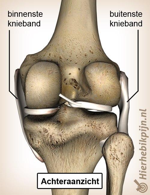 knie kniebanden binnenste buitenste knieband achteraanzicht