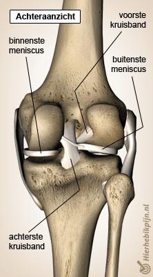 Popliteus tendinitis  Oorzaak symptomen amp behandeling