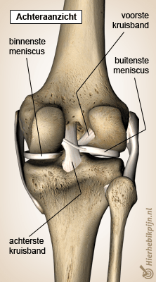 knie meniscus back