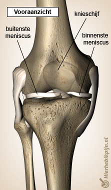 knie meniscus front