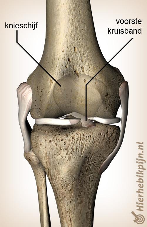 knie voorste kruisband ligamentum cruciatum anterius