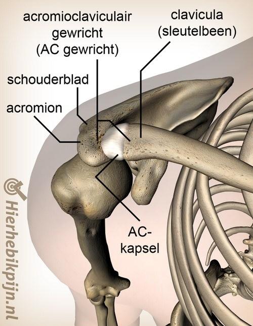 schouder acromioclaviculair ac gewricht ligament bovenzijde