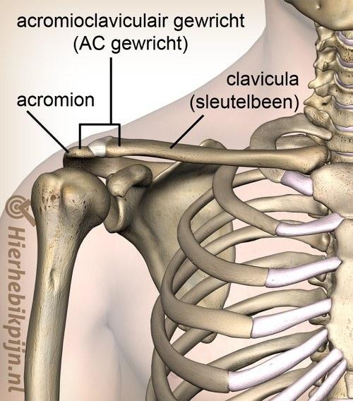 schouder acromioclaviculair ac gewricht ligament voorzijde