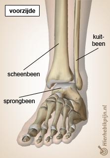 voet enkel ventraal scheenbeen kuitbeen