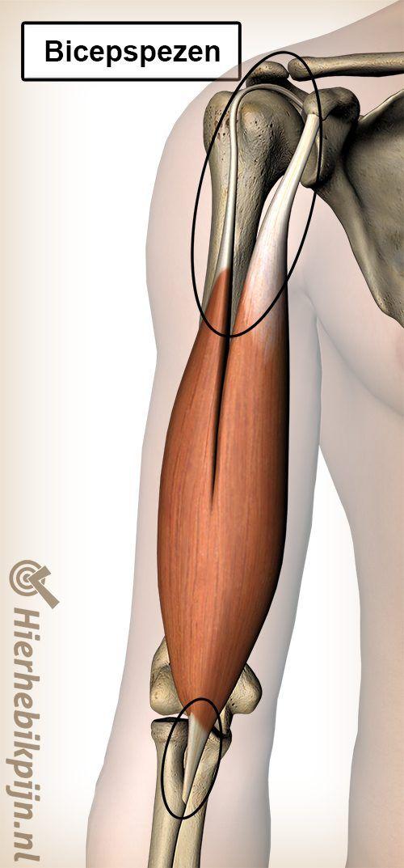 bicepspezen