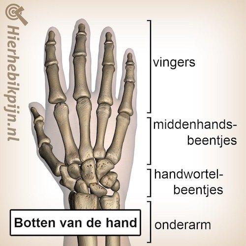 hand dorsaal botten