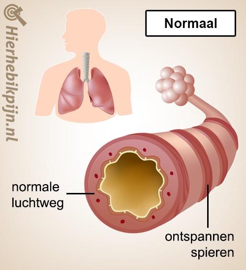 longen astma normaal gezond