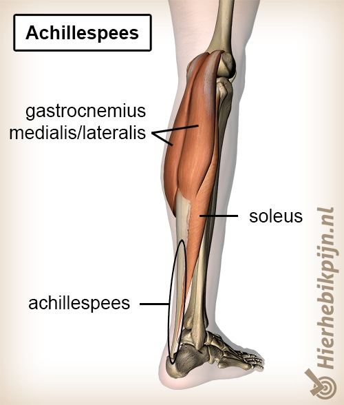 onderbeen triceps surae achillespees