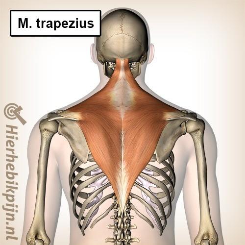 spier rug trapezius